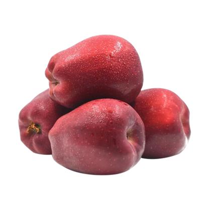 【熊貓鳥】甘肅花牛蘋果 新鮮水果蛇果 甜美可口 2.5斤 75#-80#(2單合發1件凈重5斤裝 14個左右偶數件發貨)