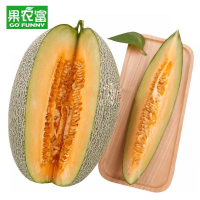 果農富 西州蜜哈密瓜 4.4-5斤 約1-2個 網紋瓜香瓜甜瓜蜜瓜新鮮水果新疆哈密瓜
