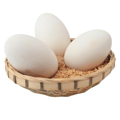 農家散養大鵝蛋6枚裝 新鮮鵝蛋 非雞蛋鴨蛋鵪鶉蛋變蛋 桃小淘