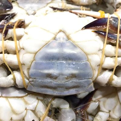 全母梭子蟹10斤新鮮活凍速凍螃蟹特大梭子蟹4-6兩/只 全母4-6兩/只 10斤
