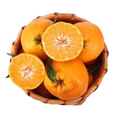 四川不知火丑柑 2.5斤(帶箱) 中果 耙耙柑 春見 新鮮水果 生鮮水果 國產水果 陳小四水果 其他