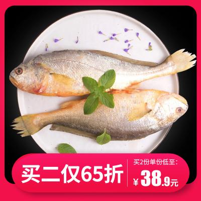 三都港无公害黄花鱼1.2斤 黄鱼黄瓜鱼海鲜新鲜生鲜冷冻海鱼2条装