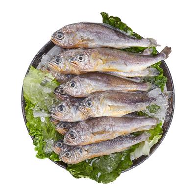 简单滋味 东海小黄鱼480g(10-12条)