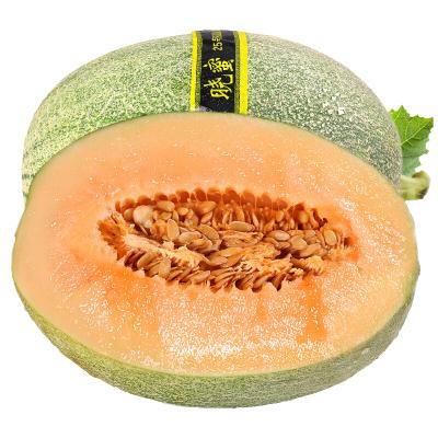 哈密瓜9斤 西州蜜 脆甜網紋蜜瓜香瓜 新鮮水果