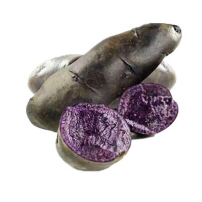 精选黑土豆马铃薯紫土豆5斤装