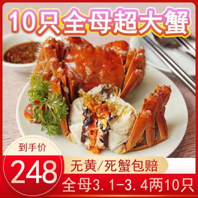 餐中王阳澄湖镇全母蟹大闸蟹鲜活10只大螃蟹水产3.1-3.4两