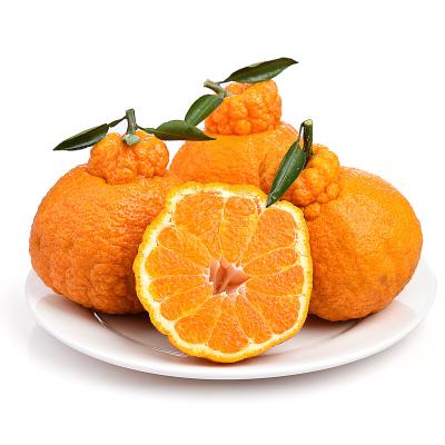 鮮菓籃 新鮮現摘水果丑柑不知火 帶箱10斤裝大果 橘子 自營水果生鮮