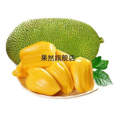 海南菠蘿蜜1個 27-31斤 黃肉菠蘿蜜 新鮮水果 生鮮水果 國產水果 陳小四水果