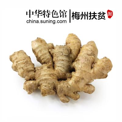 【中華特色】梅州扶貧館 黃姜 生姜 農家鮮姜 月子姜 老姜 新鮮蔬菜調味品 1500g 3斤裝 華南