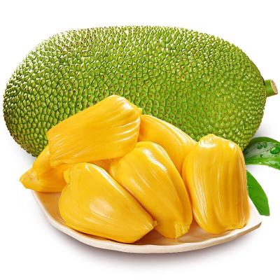【天府生鮮】海南菠蘿蜜 新鮮水果 香甜可口 1個 凈重17-19斤裝 西沛
