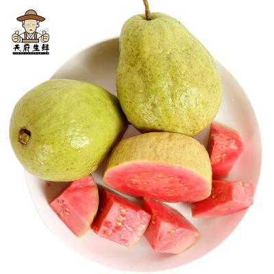 【一賢生鮮】西沛國產福建紅心芭樂 番石榴5斤裝 新鮮生鮮水果 甘甜可口