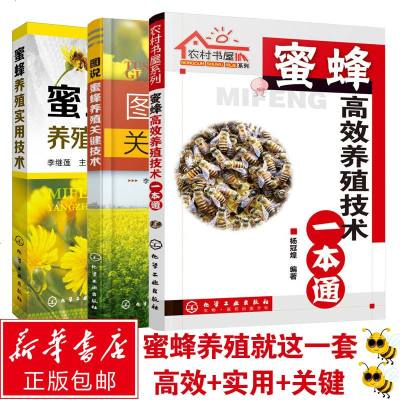 【正版 全套3册】养蜂书籍 一本通+关键技术+实用技术 蜜蜂养殖技术大全指导书 养蜂技术 教程 中蜂养殖技术大全