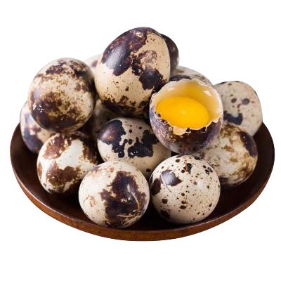 新鮮散養生鵪鶉蛋50枚 破損包賠 鶉鳥蛋 生鮮蛋 非雞蛋鴨蛋鵝蛋變蛋