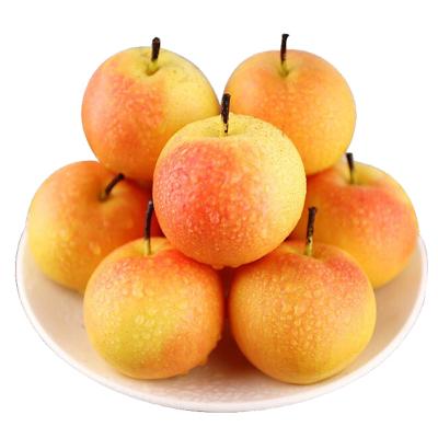 鞍山南果梨大果10斤 南国梨 新鲜水果
