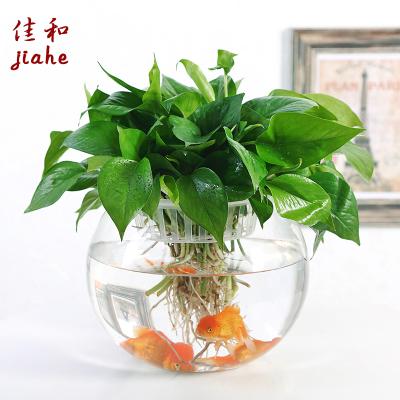 生日礼物 女生 创意 实用 新款大号 椭圆 玻璃 水培 植物 花盆 办公室 桌面 水养 绿箩 铜钱草 花瓶 圆形 透明