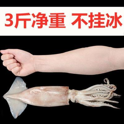 凈重大魷魚整只新鮮冰鮮海鮮水產生鮮魷魚燒烤火鍋冷凍槍整只烏賊 3斤