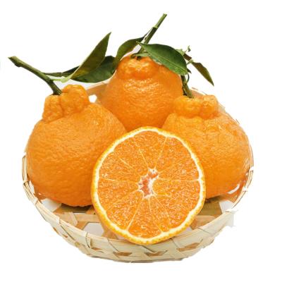 陳小四水果 四川 不知火丑橘 5斤  中果(帶箱) 丑八怪柑橘 新鮮水果 生鮮水果 其他