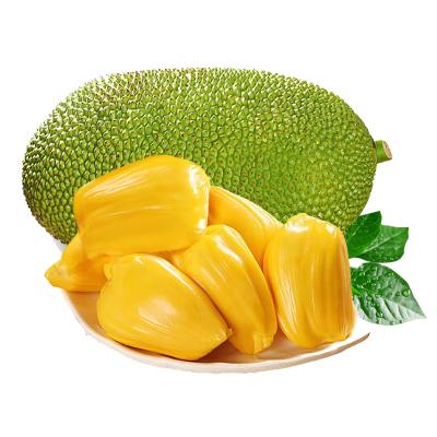 海南菠萝蜜 1个 18-22斤 黄肉菠萝蜜 新鲜水果 生鲜水果 国产水果 陈小四水果 其他