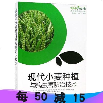 正版 現代小麥種植與病蟲害防治技術 農業種植系列讀物書籍科學致富種植養殖農村安全生產農業技術提升訓練
