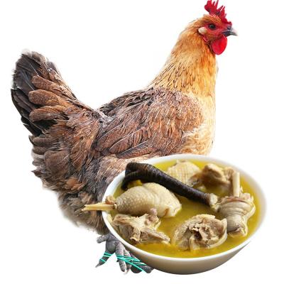 【買一只送一只】農謠 蘇北農家老母雞 新鮮土雞肉 整只裝 殺后凈重約1100g 土雞