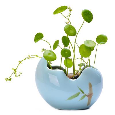 水培容器创意简约大植物器皿绿萝多肉铜钱草水仙花盆陶瓷批发清仓