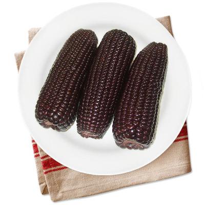 黑玉米 6根装 约1200g 方便即食玉米 真空包装 新鲜蔬菜